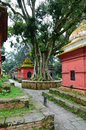 Hindu temple in kathmandu valley old tree pashupatinath complex nepal Stock Photography