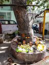 Hindus offer prayer and edibles to the god by worshipping tree Royalty Free Stock Photo