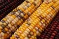 Hindusi kukurydziany Fotografia Stock