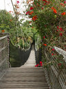 Hinged bridge wooden in jungle park spain tenerife canary island Royalty Free Stock Image
