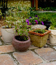 Hinterhoftopfpflanzen Lizenzfreies Stockbild