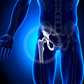 Hip joint anatomy bones medical imaging Royalty Free Stock Images