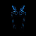Hip joint pelvic girdle also called bony pelvis in human anatomy basin shaped complex of bones that connects the trunk and legs Royalty Free Stock Image