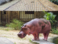 Hippo the hippopotamus or Stock Photo