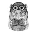 Hippo, Hippopotamus, behemoth, river-horse wearing aviator hat Motorcycle hat with glasses for biker Illustration for