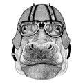Hippo, Hippopotamus, behemoth, river-horse wearing biker helmet Animal with motorcycle leather helmet Vintage helmet for