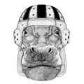 Hippo, Hippopotamus, behemoth, river-horse Wild animal wearing rugby helmet Sport illustration