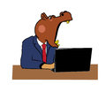 Hippo in office head of the at a table with a laptop Stock Photography