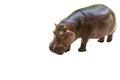 Hippo potamus isolated Royalty Free Stock Photo