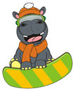 Hippo riding on the snowboard Royalty Free Stock Photo