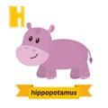 Hippopotamus. H letter. Cute children animal alphabet in vector. Royalty Free Stock Photo