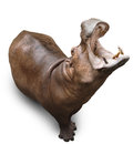 Hippopotamus on white Royalty Free Stock Images