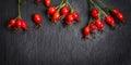Hips berries on dark slate background banner for website Stock Images