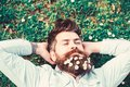 Hipster on peaceful face lays on grass, top view. Guy looks nicely with daisy or chamomile flowers in beard. Man with Royalty Free Stock Photo
