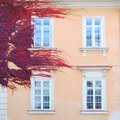 Historic house wall covered with ivy red leaves Royalty Free Stock Photo