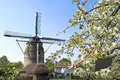 Historic windmill gronsveld and blossom tree netherlands province limburg village municipality eijsden margraten for the tower Royalty Free Stock Images
