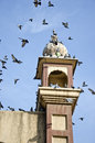 Historical tower with pigeons in amritsar india punjab Stock Image