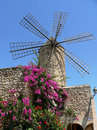Historical windmill with flourishing bougainvillea majorca and blue sky Stock Photos