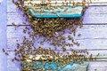 Hives in an apiary with bees flying to the landing boards in a green garden. Honey bee drone trying to enter the hive on a landing Royalty Free Stock Photo