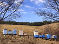 Hives hive in a field in winter blue background is the fir wood Stock Photos