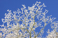 Hoar frost Royalty Free Stock Photo