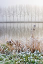 Hoar frost on reed near a canal Royalty Free Stock Photo