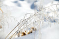 Hoarfrost on branches of herbs grass a background snow Stock Image