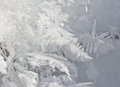 Hoarfrost closeup of formed from delicate ice crystals Royalty Free Stock Images