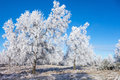 Hoarfrost covered trees in winter landscape Stock Photography