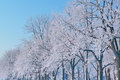 Hoarfrost encases forest bare trees frigid winter morning michigan usa Royalty Free Stock Photos