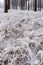 Hoarfrost on grass morning the with trees in the background Stock Photo