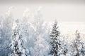 Hoarfrost kõrvemaa bog estonia Royalty Free Stock Photos