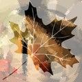 Hoja de arce del vector Foto de archivo libre de regalías
