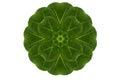 Hoja de la forma de la flor Fotografía de archivo