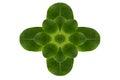 Hoja de la forma de la flor Fotografía de archivo libre de regalías