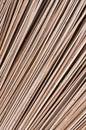 Hoja seca del coco Foto de archivo libre de regalías