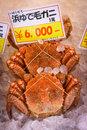 Hokkaido crab king crabs are the largest and they are caught in the sea of ohotsuk hanasaki or queen crabs look like Royalty Free Stock Image
