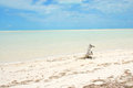 Holbox island caribbean paradise sea shore at a beach in an with transparent water for a relaxing summer holiday Royalty Free Stock Photos