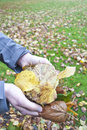 Holding autumn leafs Royalty Free Stock Photo
