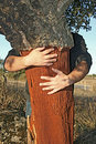Holding cork tree Stock Photo