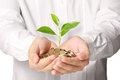 Holding plant sprouting from a handful of coins businessman Stock Photography