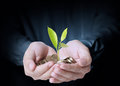 Holding plant sprouting from a handful of coins businessman Stock Photos