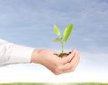 Holding plant sprouting from a handful of coins businessman Stock Images