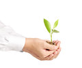 Holding plant sprouting from a handful of coins businessman Stock Photo