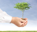 Holding plant sprouting from a handful of coins businessman Royalty Free Stock Images