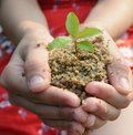 Holding a sprouting seedling Royalty Free Stock Photos