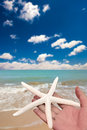 Holding starfish Royalty Free Stock Photography
