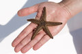 Holding a starfish on the palm Royalty Free Stock Photo