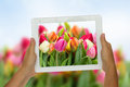 Holding tablet against spring flowers background woman hand Royalty Free Stock Photography
