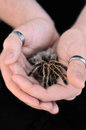 Holding a tarantula this is man in his hands Royalty Free Stock Photos